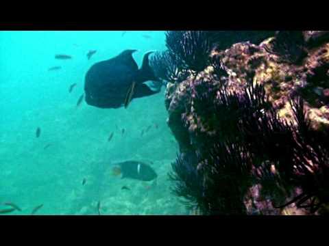 Banderas Bay - Puerto Vallarta adventure!