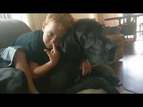 Bunk (my Great Dane) is best buds with my 5 year old nephew
