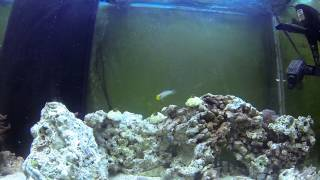 Golden Head Sleeper Goby: Quick Care Facts