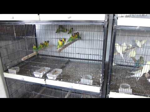 Humidity Control Karne Ka Asan Tariqa   Birds ko Garmi Se Bchana!!!