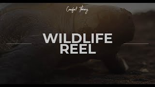 Comfort Theory Wildlife Reel