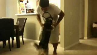 This Video Previously Contained A Copyrighted Audio Track. Due To A Claim By A Copyright Holder, The Audio Track Has Been Muted.     Dancing With My Siberian Husky