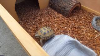 Awesome Tortoise / Box Turtle Setup at LLLReptile