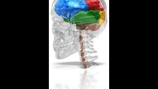 Wie unser Gehirn funktioniert: Neuronews Emotionale Konflikte