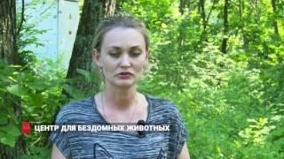 Во Владивостоке началось строительство центра помощи для бездомных животных