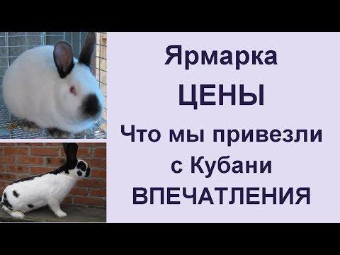 Рынок ярмарка в Кропоткине 2019 Ассортимент птиц и животных, цены и наши впечатления