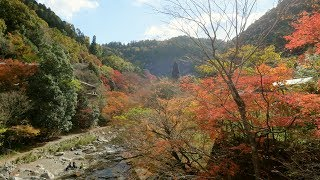 yajiさんの京都 秋の紅葉 清滝川 遊歩道 ②【Kyoto, Kiyotaki river hiking trail ②】