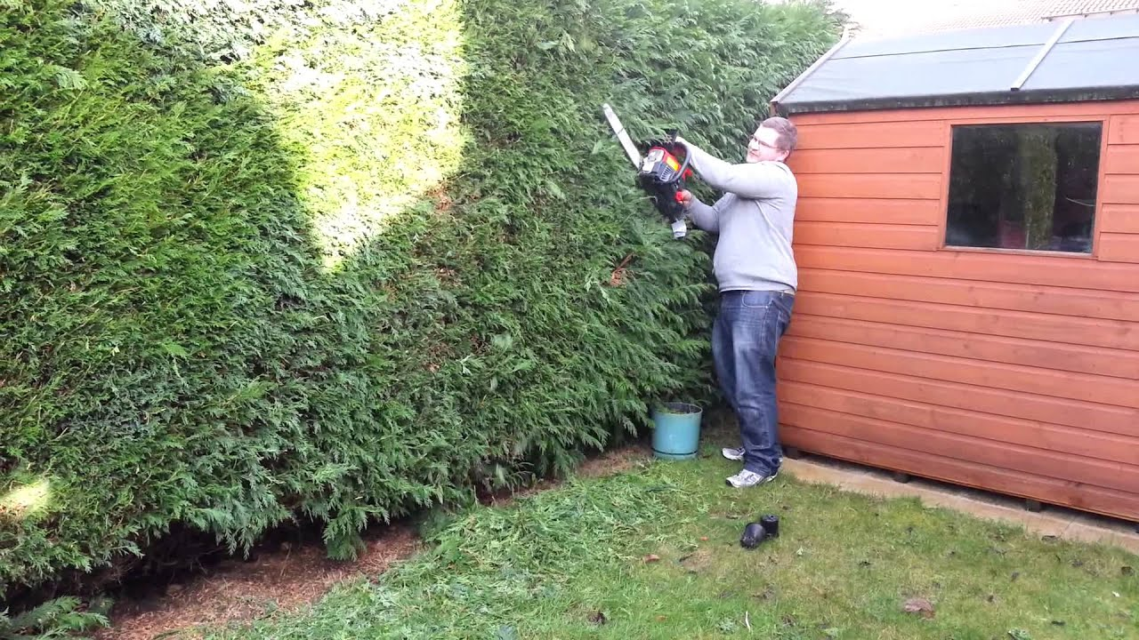 chain saw to cut the hedge youtube. Black Bedroom Furniture Sets. Home Design Ideas
