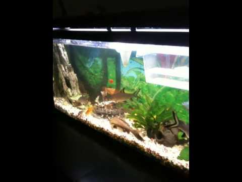 Tortugas y la comunidad de peces de agua dulce caliente en for Acuario tortugas