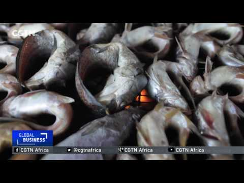 Fish drying technology improves working conditions in Ivory Coast