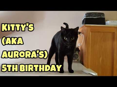 Kitty's 5th Birthday! ~ Our Other Adorable Pets 3 - VOL. 43