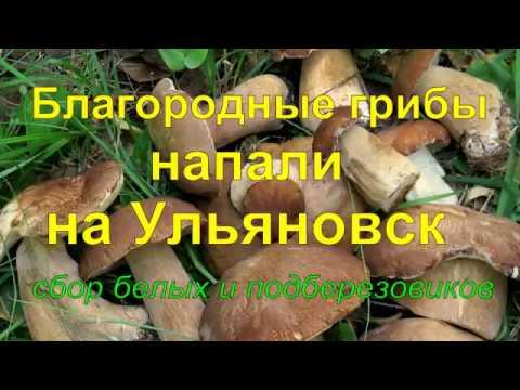 Благородные грибы напали на Ульяновск. Отличный сбор белых и подберезовиков.2018г.