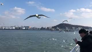 2020.01.12 인천 월미도- 영종도 여객선 바다 …