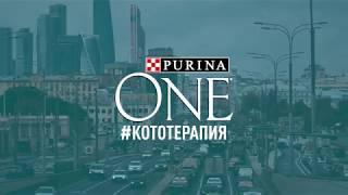Кототерапия от PURINA ONE®