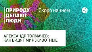 Как видят мир животные / Всё обо всём с Александром Толмачёвым