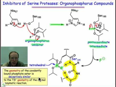 Sarin: A Serine Protease Inhibitor