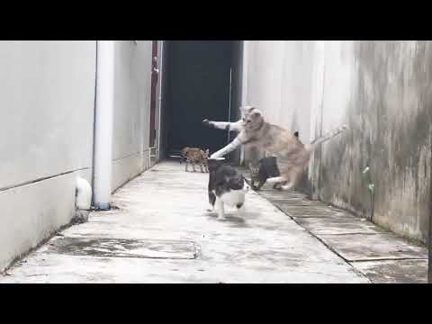 This Cat Jumping Over A Gang Of Feline Bullies Feels Right Out Of A Movie