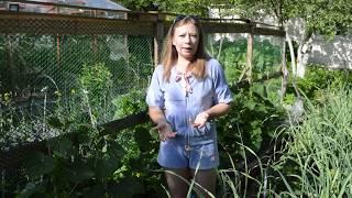 Шпалера для огурцов, чем подкормить огурцы летом