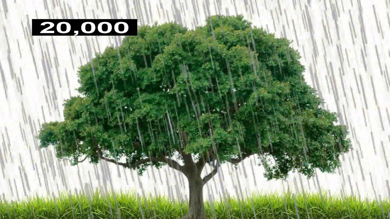 Fotosyntese forklaret på 60 sekunder
