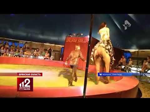 Цирковой верблюд сбрасывает наездницу. Видео!