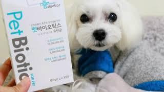 강아지 유산균, 펫바이오스틱 마이펫닥터 잘먹네!!