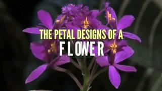 Nature's Fractal Patterns and Fibonacci Sequences