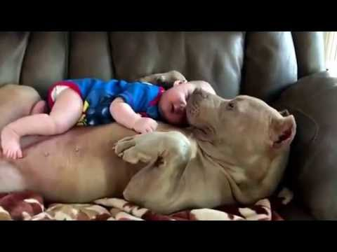 Nanny Dog 🐶👶🏼 - YouTube