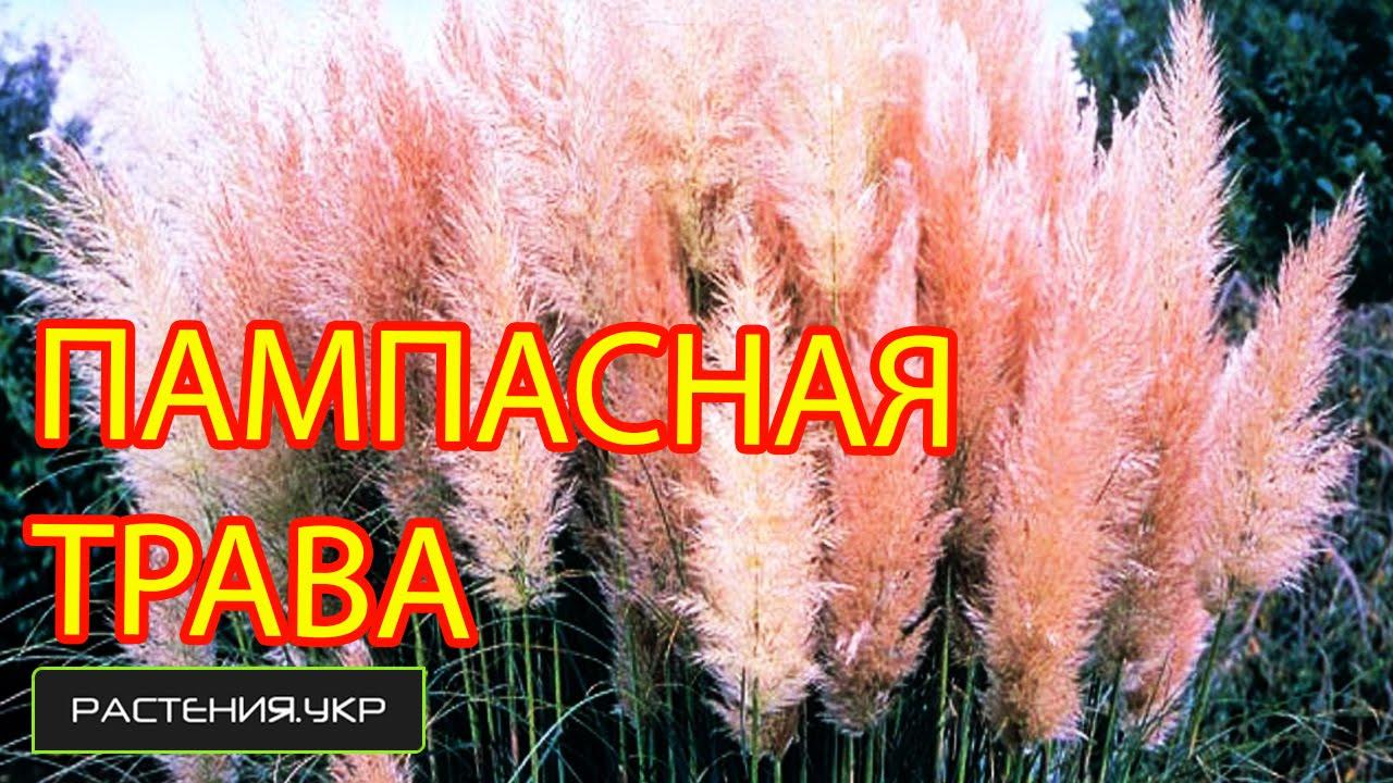 Купить триммеры и косы для травы недорого в интернет-магазине оби. Выгодные цены на садовый триммер. Доставка по москве, санкт петербургу и.