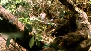 Jungle Boy 1987 | Malayalam Full Movie | Malayalam Movie Online | Pattom Sadan | Irfan