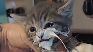 CAT MEMES COMPILATION V04
