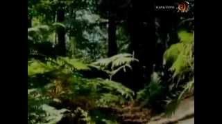 Дикий кабан - царь лесов