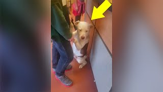 Питбуль понимает, что его семья покидает его. Реакция собаки сделает ваши глаза мокрыми