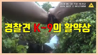 [미국경찰블릿#157]경찰견 K-9의 활약상[한글자막과…