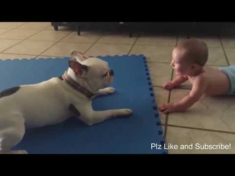 French Bulldog Funny Moments & Fails Compilation -Frenchie Try not to laugh or grin Challenge