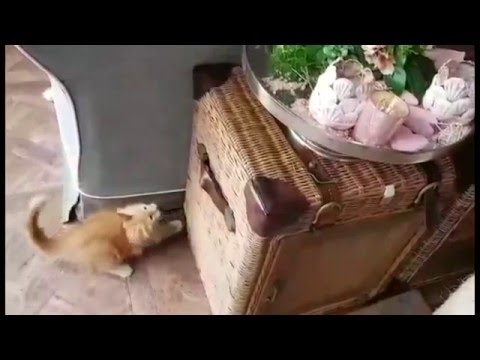 Funny Mainecoon kitten playing with a fake flower