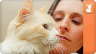 Cats from Hoarders - Cat Connection