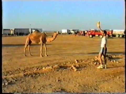 Geosource Seismic Crew: Camel in Camp