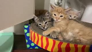 Kittens Snuggle 🥰