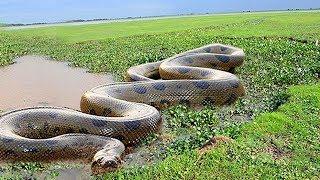 अमेज़न जंगल के सबसे खतरनाक जानवर| Facts about  Amazon Rainforest Animals |Amazon jungle