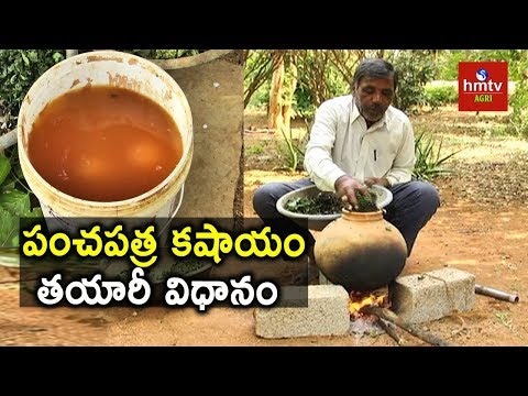 Panchapatra Kashayam Preparation   Natural Farming   hmtv Agri