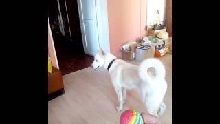 #Как обмануть собаку