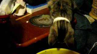 Kitty Nip