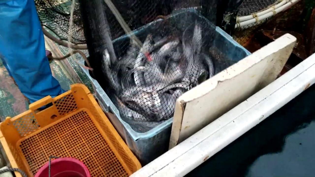【Big  catch】  Japanese fish  fishing   【神回】これぞThe大漁