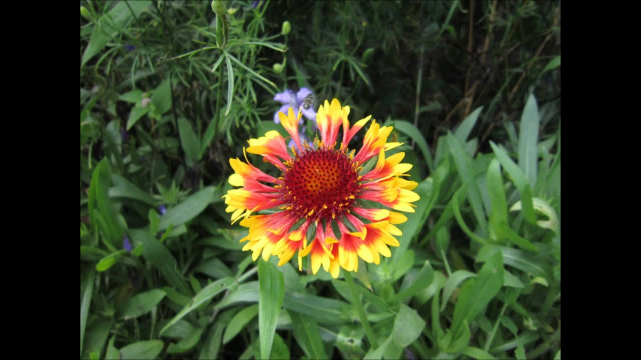 Flowers In Nuwara Eliya Youtube