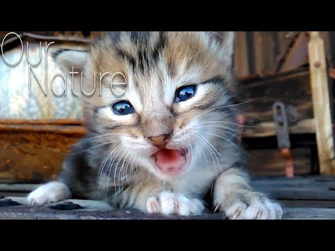 The Top Ultimate Cutest Kittens Meowing Compilation 2017