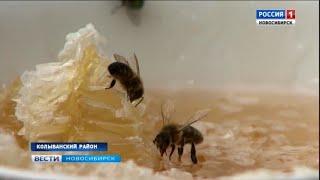 Сезон сбора мёда завершается в Новосибирской области