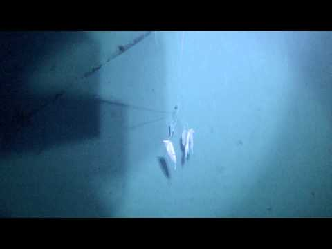 Deep Dropping For Golden Tilefish In Dry Tortugas, 800' Underwater Video