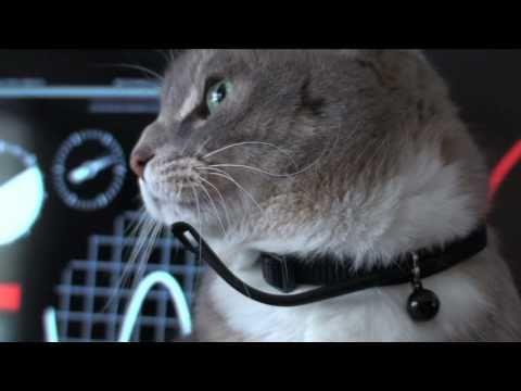 Cat Tank Wars - Mission: Kibble