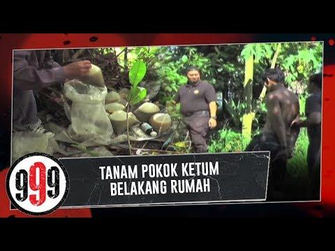 TANAM POKOK KETUM BELAKANG RUMAH | 999 (4 December 2018)