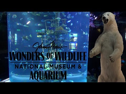 Wonders of Wildlife Aquarium & Museum Tour & Review with The Legend